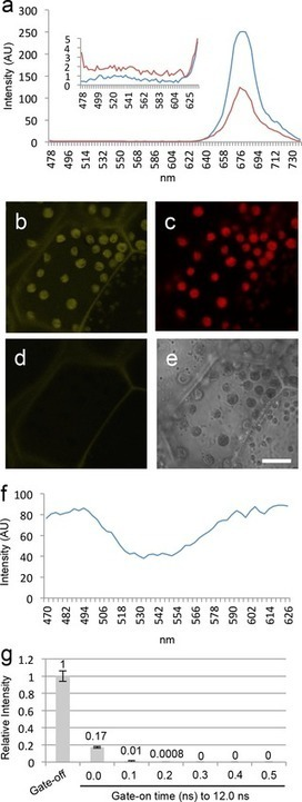 Time Gating of Chloroplast Autofluorescence Allows Clearer Fluorescence Imaging  In Planta   image analysis in a plant cell context   Scoop.it
