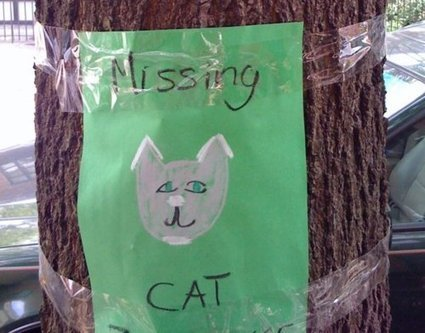 Quick Tips For A Cat Gone Missing | Cat Care And Fun | Scoop.it
