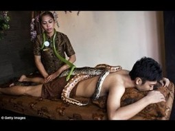 Indonesian spa gives massages by draping your body in SNAKES | METRO QUBE | METROQUBE | Scoop.it