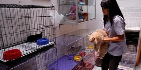 How To Care For A Pet When You Travel   Pet Care News   Scoop.it