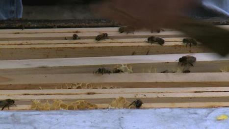De nouvelles pratiques en faveur des pollinisateurs | Abeilles, intoxications et informations | Scoop.it