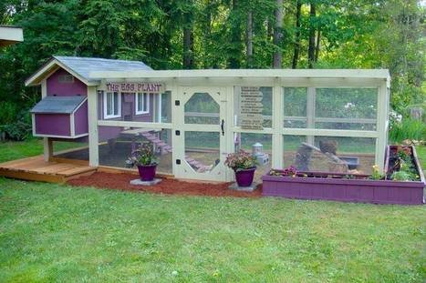 Backyard Chickens: How to Design Your Chicken Run | Maisons éco | Scoop.it