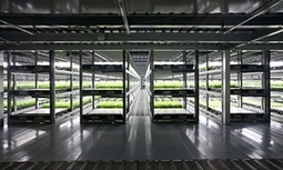 Japanese firm to open world's first robot-run farm | Vertical Farm - Food Factory | Scoop.it