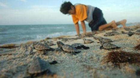 Yucatán realiza programa de conservación | Conservación y desarrollo | Scoop.it