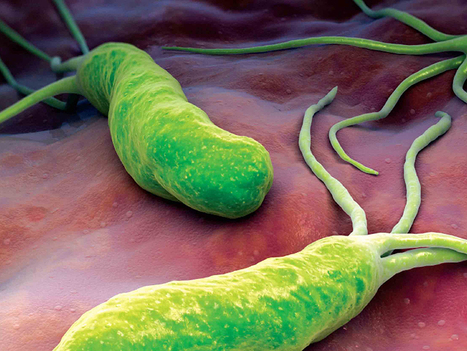 Effective Natural Remedies Against Helicobacter Pylori | ForHealthBenefits | Scoop.it