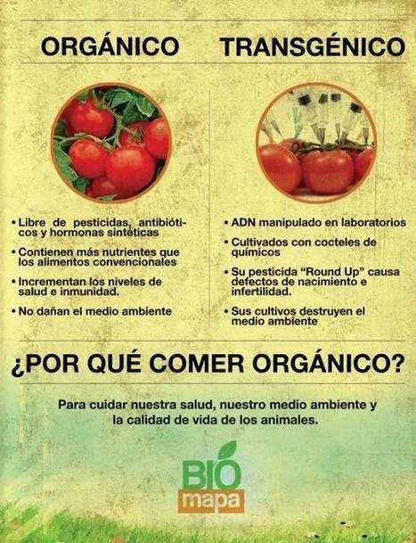 CNA: Cómo las empresas que producen alimentos transgénicos han dependido siempre del engaño | La R-Evolución de ARMAK | Scoop.it