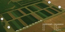 Crop Rotation Generates Profits without Pollution (or, What Agribusiness Doesn't Want You to Know) - The Equation | LOCAL HEALTH TRADITIONS | Scoop.it
