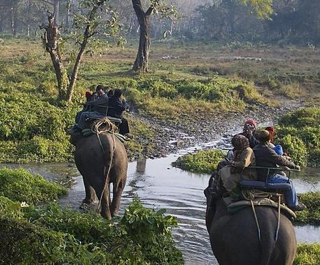 Resorts near Rajaji: Make you Enjoy the Wildlife of Uttarakhand at Its Best | Luxury Resorts In Rishikesh | Scoop.it