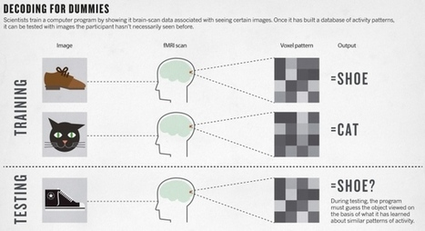 Brain decoding: Reading minds | Amazing Science | Scoop.it