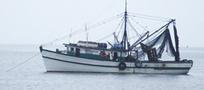 Ecuador busca alternativas al arrastre - En portada - Industrias Pesqueras | MOVUS | Scoop.it