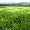 Celiachia, allergia al grano e sensibilità al glutine: le differenze   Celiachia   Scoop.it