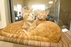 After two decades, pet adoption center becomes a reality - Decorah Journal | Animal Rescue & Shelter Life | Scoop.it