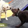 Dog grooming Melbourne