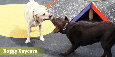 Pet Minding Melbourne   Dog grooming Melbourne   Scoop.it