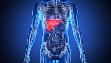 In 2014 wordt menselijke lever eerste orgaan dat uit 3D-printer rolt   ICT business cases   Scoop.it