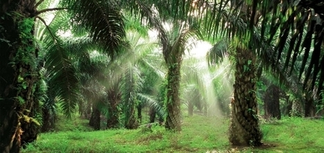 CPG Giants, NGOs, Traders Agree on Unifying Definition of 'No Deforestation' Palm Oil | Sustainable Brands | Responsible Sourcing | Scoop.it