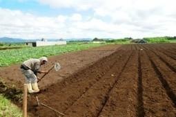 FAO e IICA apoyarán desarrollo agrario y seguridad alimentaria en Paraguay | ICNDiario | dollys_1980@hotmail.com | Scoop.it