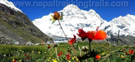 Annapurna base camp trekking, Annapurna trek - Nepal Trekking | Nepal Trekking Trails | Scoop.it