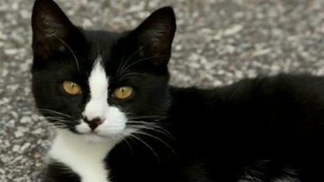 Découvrez l'histoire étonnante de ce chat totalement accro à McDonald's   Vétérinaire assistante   Scoop.it