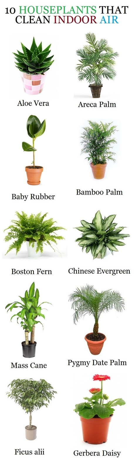 10 HOUSEPLANTS THAT CLEAN INDOOR AIR   Corporate intervention on Climate Change   Scoop.it