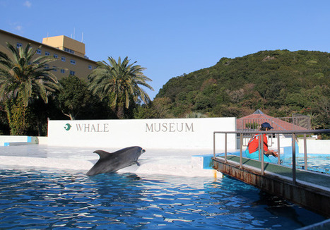 Blog: Some Peace in the Cove   SaveJapanDolphins.org   Dolphins   Scoop.it