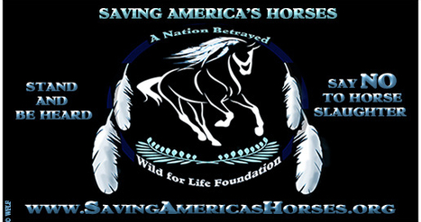American Indians Unite to Protect America's horses from slaughter and preserve them in the wild | IDLE NO MORE WISCONSIN | Scoop.it