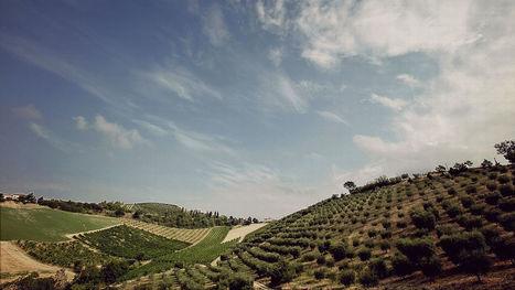 Fiorano Wines, Cossignano on Vino Nostrum | Wines and People | Scoop.it