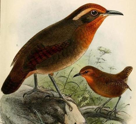 Pájaro amazónico trina como Bach y Haydn   Le BONHEUR comme indice d'épanouissement social et économique.   Scoop.it