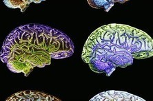 The Differences in How Women and Men Think Are Hard-Wired | Knowledge Broker | Scoop.it