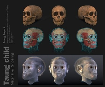 ATOR: Taung Project: 3D Forensic Facial Reconstruction   Open Cultural Heritage   Scoop.it