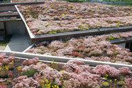 Architecture : vers des immeubles drapés de vert... | Agriculture urbaine, architecture et urbanisme durable | Scoop.it