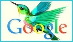 Guide pour Google Panda, Pingouin et Hummingbird | Référencement Naturel Rank it | Scoop.it