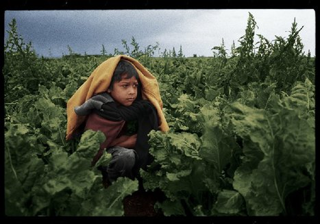 U.S. Child Migrant Farm Workers | The Harvest | Community Village Daily | Scoop.it