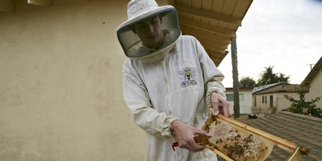 Urban Beekeepers Push For Acceptance In Los Angeles | Food issues | Scoop.it