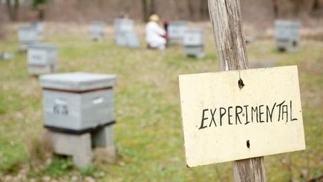 Mortalité des abeilles La recherche mobilisée | EntomoNews | Scoop.it