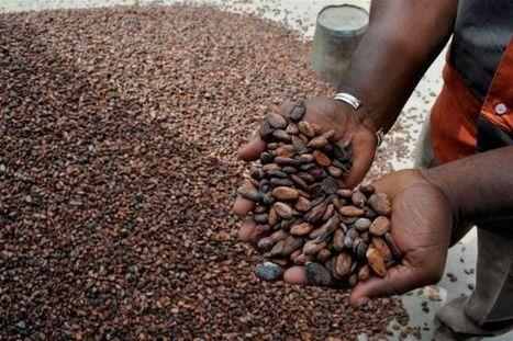 Le Parlement européen veut mettre un terme au travail des enfants dans les plantations de cacao | Des 4 coins du monde | Scoop.it