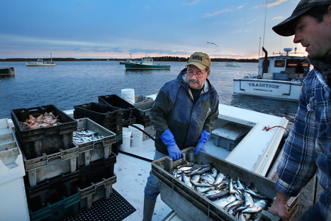 Maine isn't doing enough to protect Gulf from effects of climate change - Central Maine | Changing Chemistry - The People Impacted by Ocean Acidification | Scoop.it