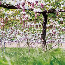 Le Japon ouvre un concours pour trouver l'ambassadeur de son vin en Grande Bretagne | Liste vin | Vin & Gastronomie | Scoop.it
