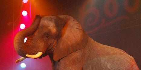 Non aux cirques détenant des animaux! | Biodiversité | Scoop.it