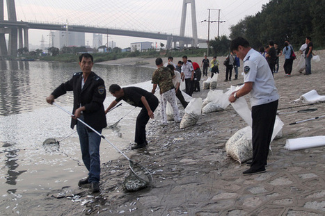 Thousands of dead fish appear on Tianjin river week after deadly blasts | GMOs & FOOD, WATER & SOIL MATTERS | Scoop.it