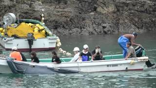 Bottlenose dolphin capture September 10-11th - The Cove - Taiji, Japan - VIDEO | OUR OCEANS NEED US | Scoop.it