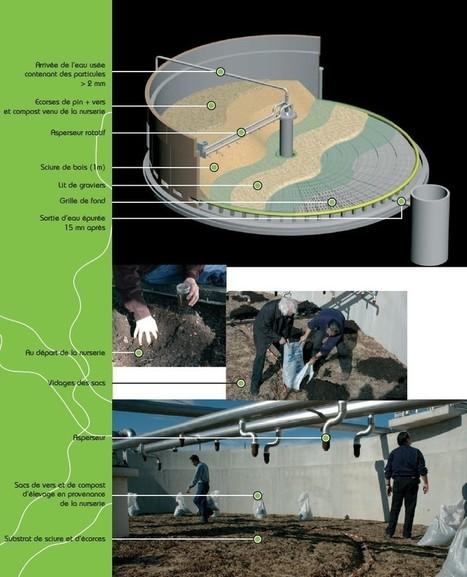 Le ver de terre perce le chemin de la station pour épurer nos eaux | Sécurité et Environnement | Scoop.it