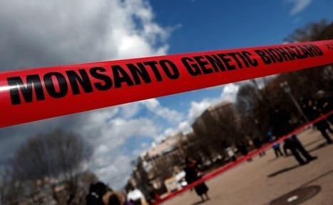 L'incroyable blanchiment du glyphosate cancérigène de Monsanto par Bruxelles - News360x | OGM, Pesticides, Les alternatives et les problèmes de l'agriculture chimique | Scoop.it