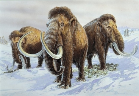 Mammoth genomes provide recipe for creating Arctic elephants | Amazing Science | Scoop.it
