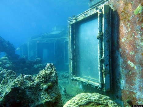 Divers Just Made The Craziest Discovery Ever. I Can't Believe What I'm Actually Looking At Here. | DiverSync | Scoop.it