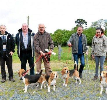 600 beagles attendus ce dimanche dans le Finistère   Beagle   Scoop.it