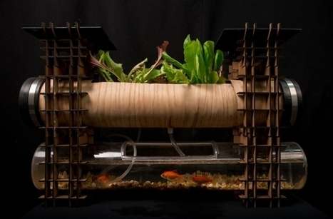 Solar powered aquaponics for apartments | Mr Brown's Design and Technology | Scoop.it