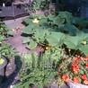 Food and Garden Fun