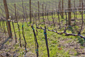 8 New Wines, Spring is arriving in Le Marche | Wines and People | Scoop.it