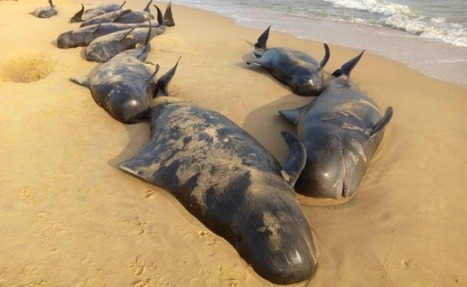 As More And More Dead Sea Animals Wash Ashore, We Look At Possible Reasons Causing It | All about water, the oceans, environmental issues | Scoop.it